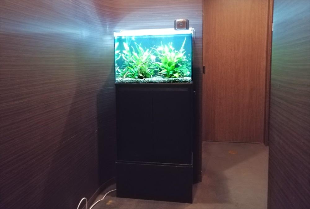中央区 オフィス事務所 60cm淡水魚水槽 設置事例 メイン画像