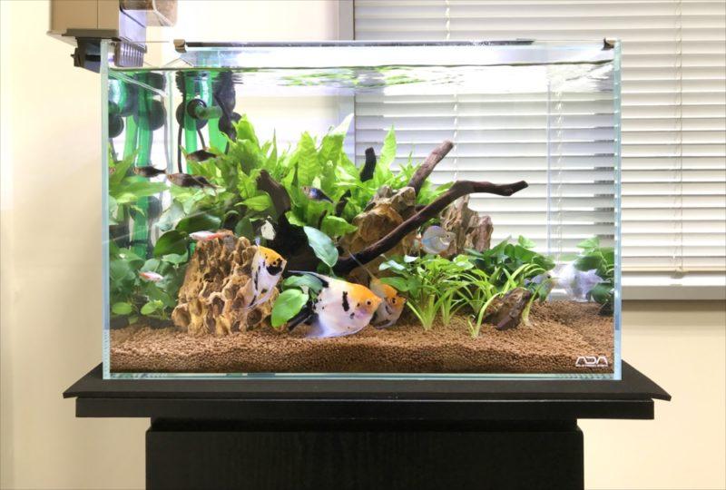 りんくう電設株式会社様 45cm淡水魚水槽 メンテナンス事例 水槽画像2