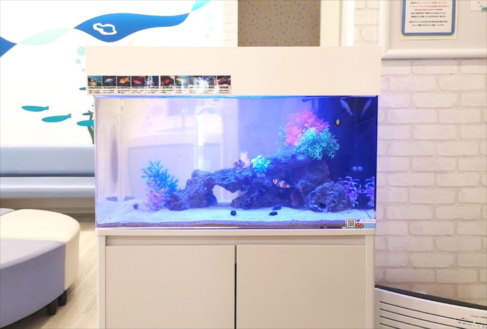 二俣川こどもクリニックの待合室 90cm海水魚水槽 正面画像