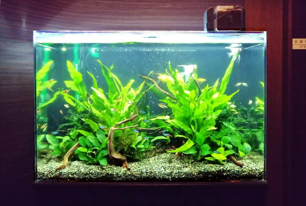 オフィス事務所 60cm淡水魚水槽 正面画像