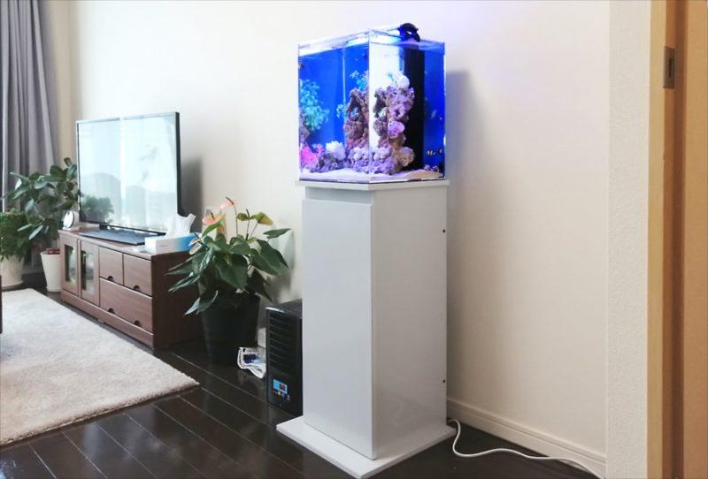 港区個人宅 30cm海水魚水槽 設置事例 水槽画像2