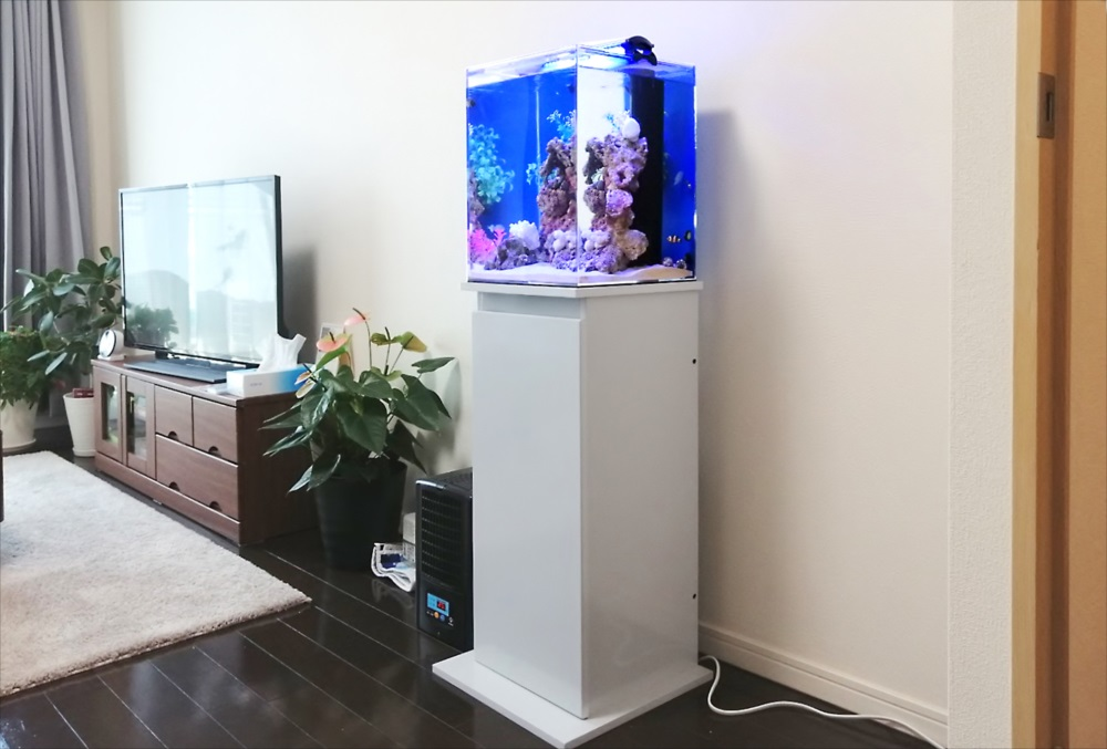 個人宅 30cm海水魚水槽 斜め全体画像
