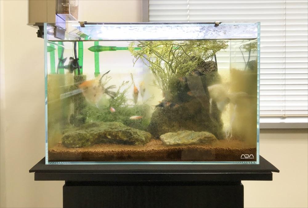 オフィス 45cm淡水魚水槽 メンテナンス前画像