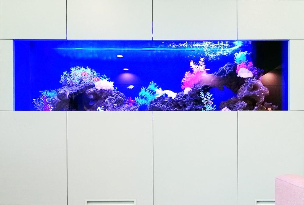 クリニックの待合室 大型海水魚水槽 正面画像