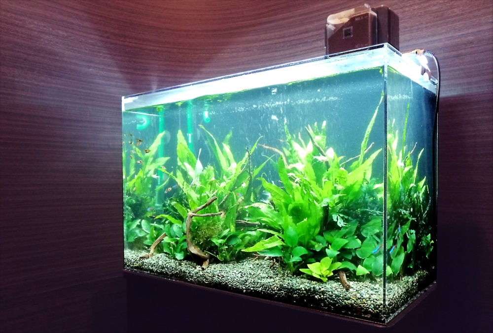 オフィス事務所 60cm淡水魚水槽 斜めアップ画像