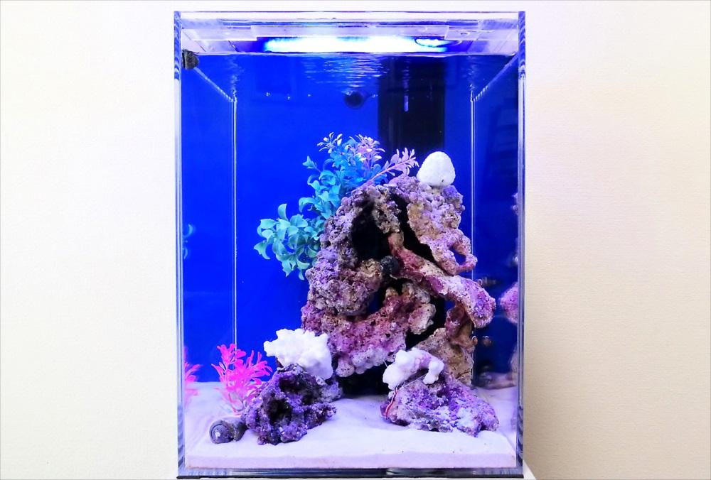 個人宅 30cm海水魚水槽 正面画像