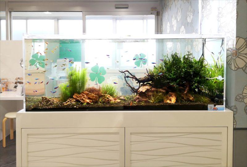 横浜 眼科クリニック 120cm淡水魚水槽 その後 水槽画像3