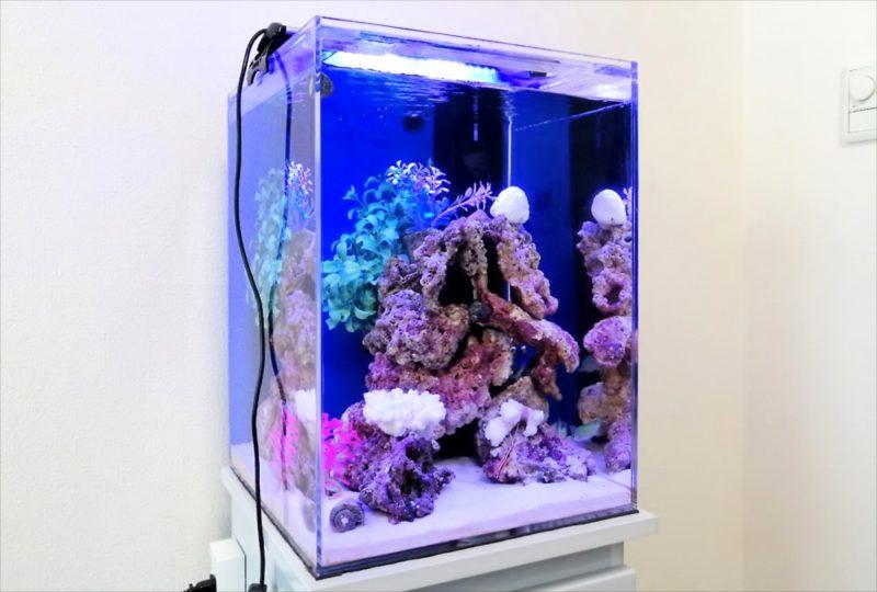 港区個人宅 30cm海水魚水槽 設置事例 水槽画像4