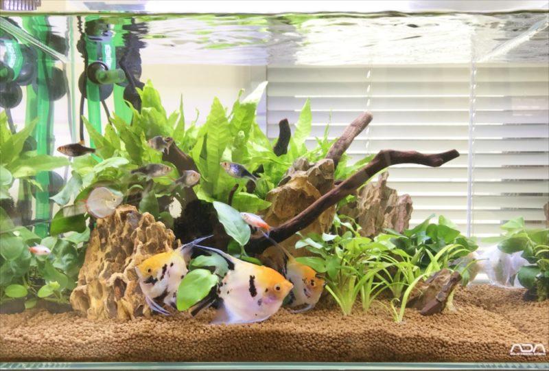 りんくう電設株式会社様 45cm淡水魚水槽 メンテナンス事例 水槽画像3