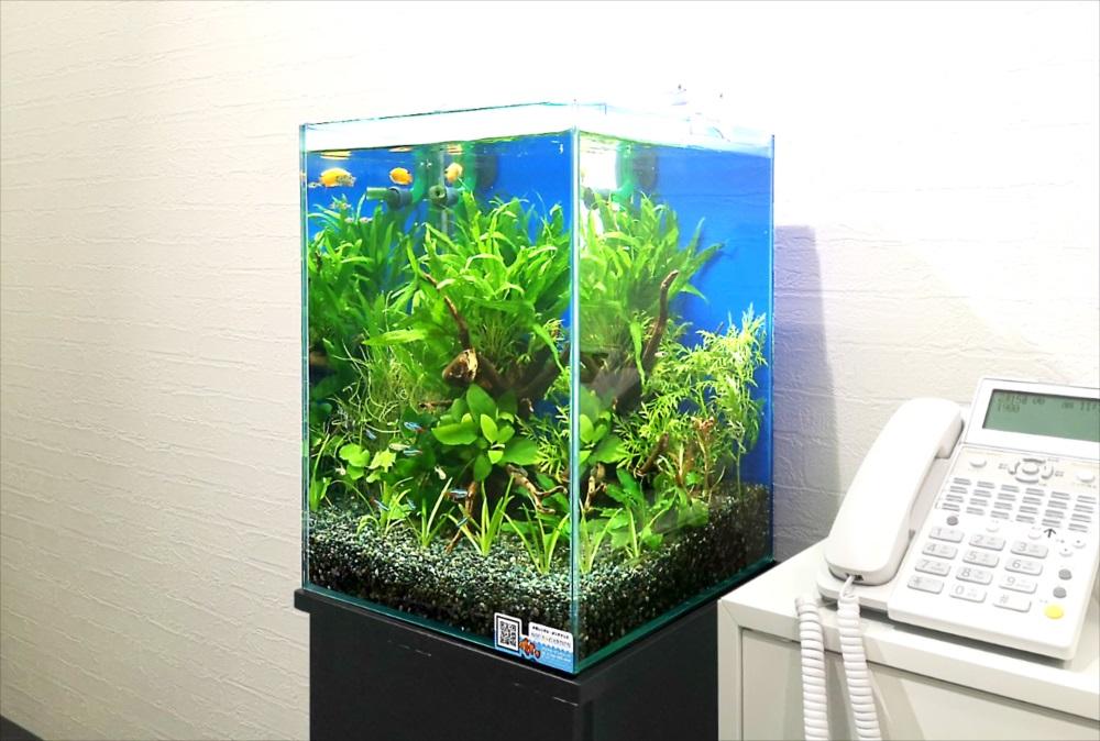 オフィスの受付ロビー 30cm淡水魚水槽 斜め画像