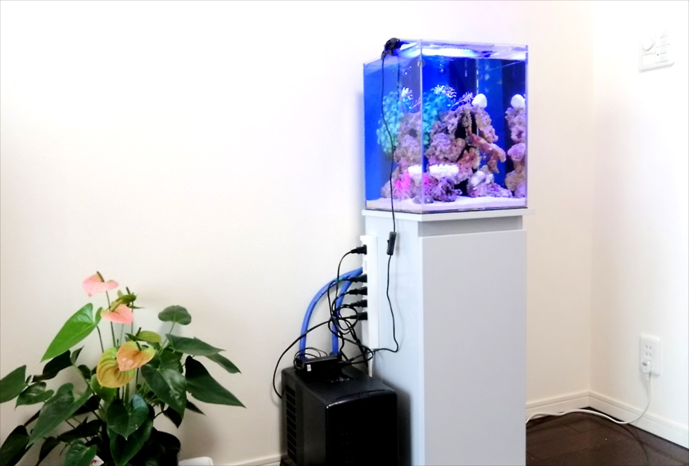 個人宅 30cm海水魚水槽 水槽台画像