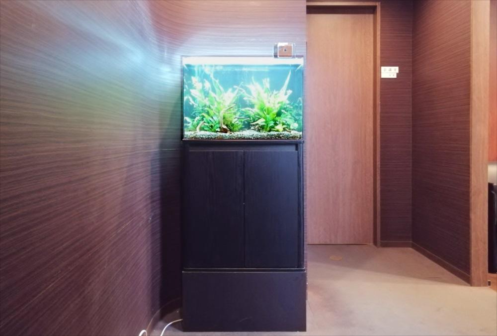 オフィス事務所 60cm淡水魚水槽 正面全体画像