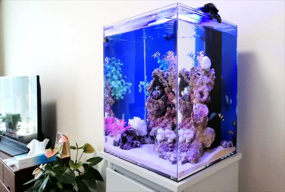 個人宅 30cm海水魚水槽 斜めアップ画像