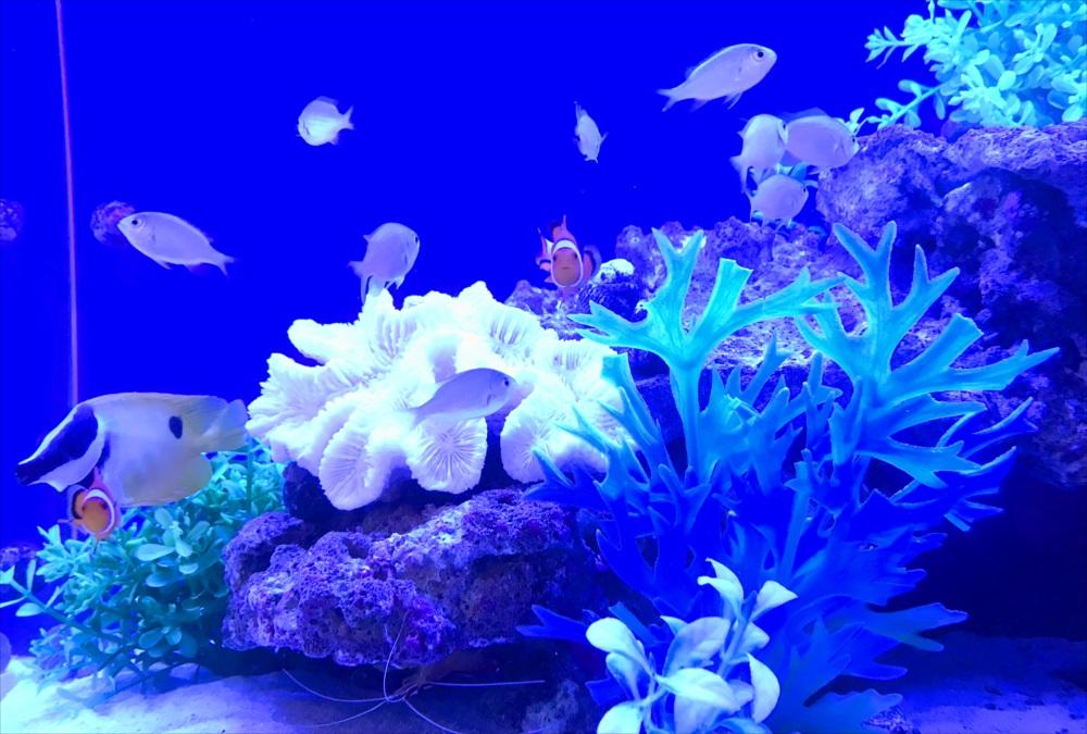 クリニック 待合室 90cm海水魚水槽 生体画像