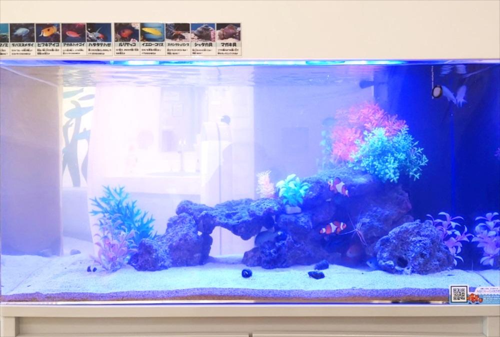 二俣川こどもクリニックの待合室 90cm海水魚水槽 正面アップ画像