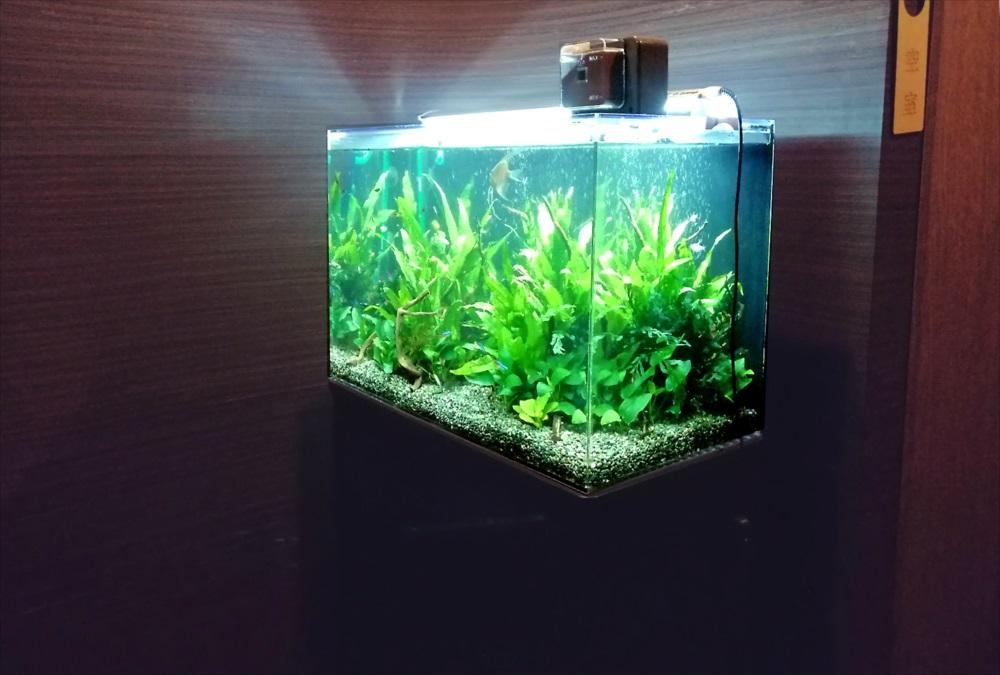 オフィス事務所 60cm淡水魚水槽 斜め画像