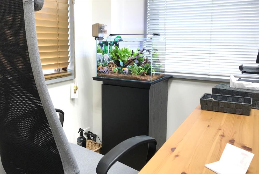 オフィス 45cm淡水魚水槽メンテナンス 斜め画像