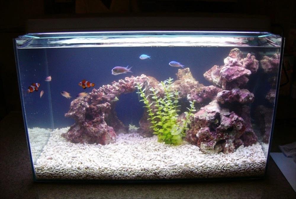 新宿区 個人宅 海水魚水槽 設置事例 メイン画像