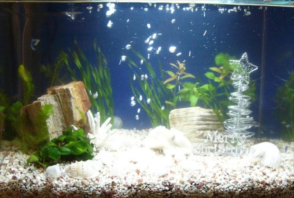 個人宅 60cm淡水魚水槽 アップ画像