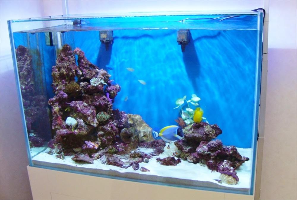オフィス サンゴ水槽 斜め画像