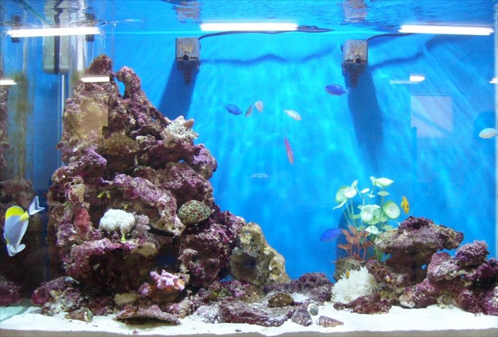 オフィス サンゴ水槽 全体画像