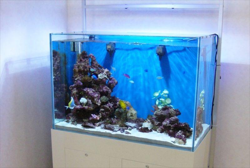 株式会社介護ブレーン様 90cmサンゴ水槽 設置事例 水槽画像1