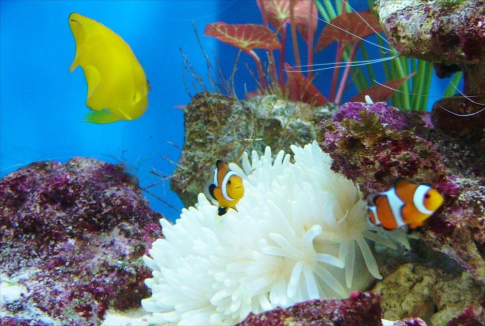 オフィス サンゴ水槽 生体画像