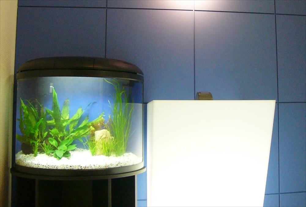 荒川区 企業様 淡水アリーナ型水槽 水槽レンタル事例 メイン画像