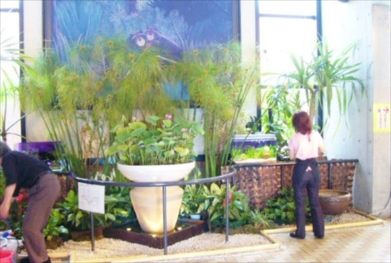 都内 イベント設営 60cm淡水水槽 設置事例 水槽画像2