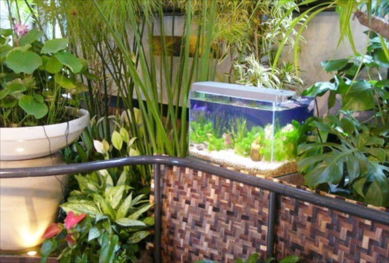 都内 イベント設営 60cm淡水水槽 設置事例 水槽画像1