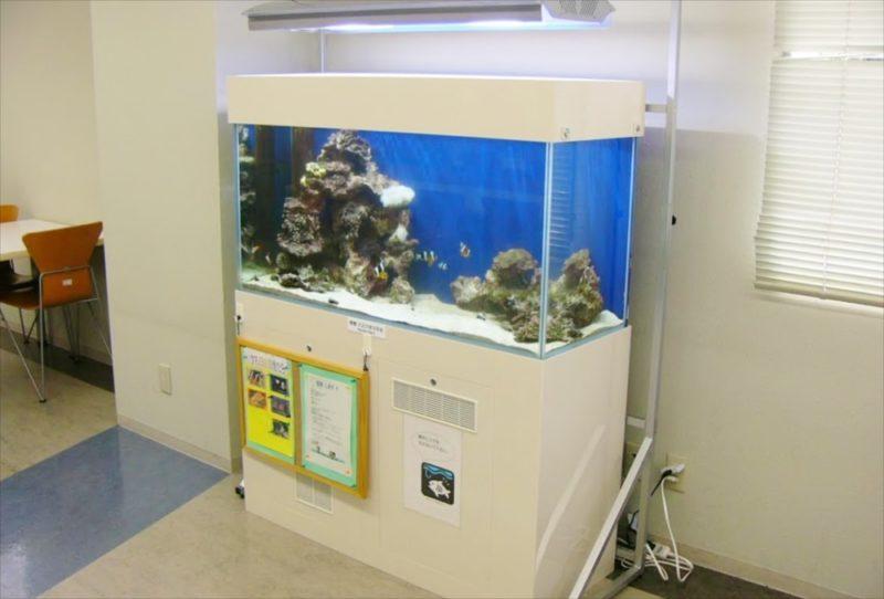 大正大学様 2F学生ラウンジ 海水魚水槽 設置事例 水槽画像2