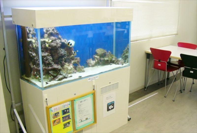 大正大学様 2F学生ラウンジ 海水魚水槽 設置事例 水槽画像4