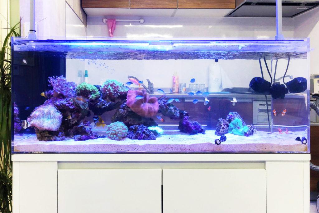 水槽レンタルのサービスと特徴を解説!熱帯魚を手軽に楽しむには!のサムネイル画像