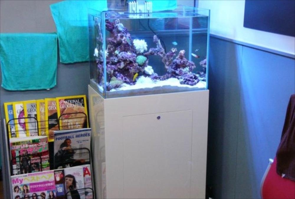 美容室 サンゴ水槽 アップ画像