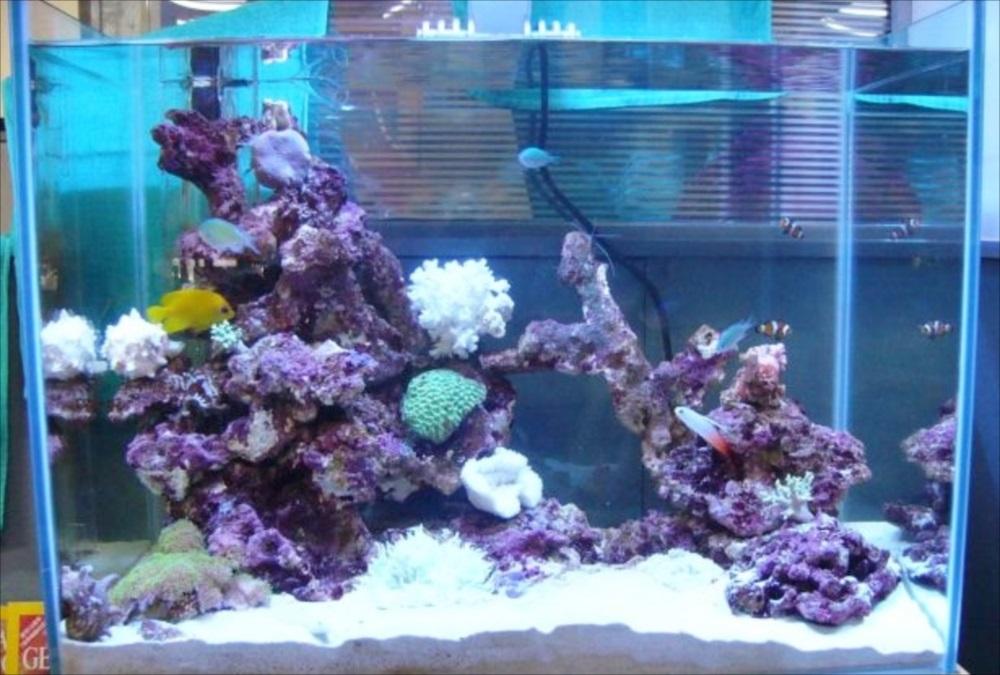 美容室 サンゴ水槽 全体画像
