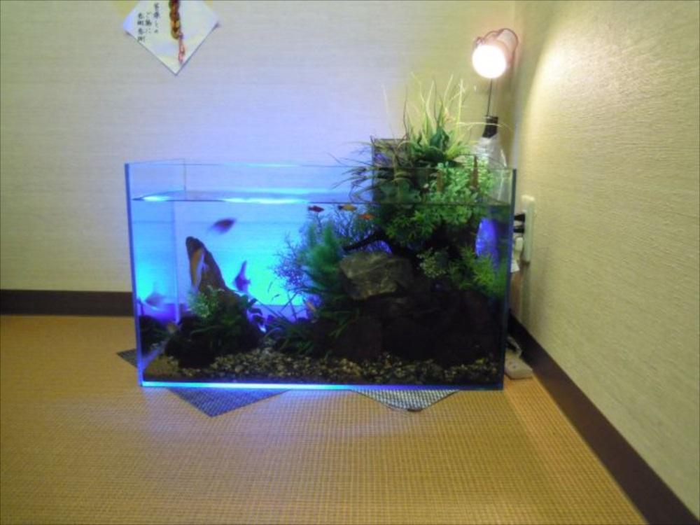 フィットネスクラブ アクアテラリウム水槽 全体斜め画像
