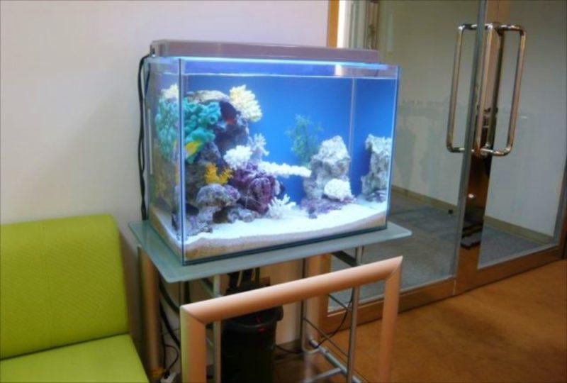 三生管財株式会社 様 60cm海水魚水槽 設置事例 水槽画像1