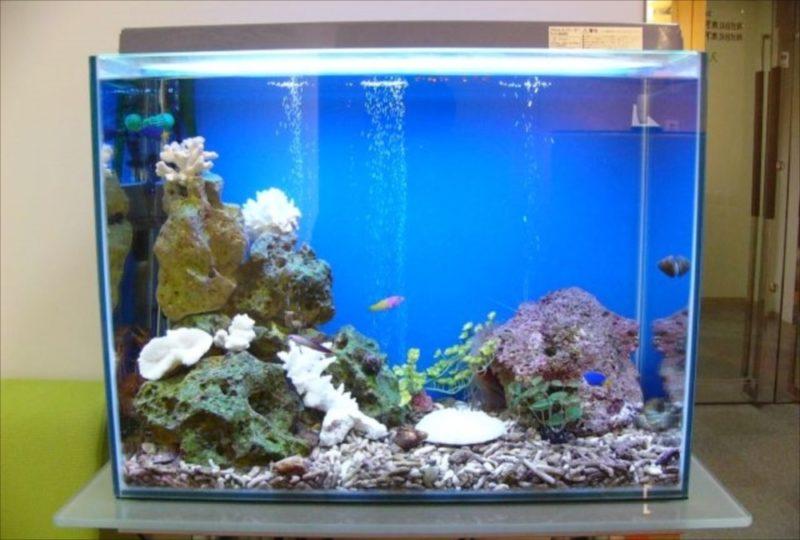 三生管財株式会社 様 60cm海水魚水槽 設置事例 水槽画像3