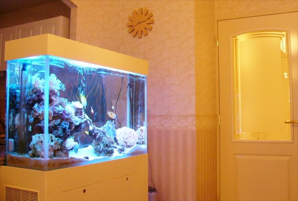 新宿区個人宅様 60cmサンゴ水槽を設置 メイン画像