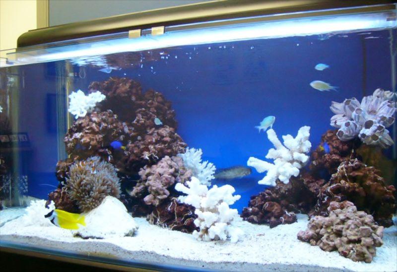 新生ファクター様に120cmサンゴ水槽を設置しました 水槽画像3