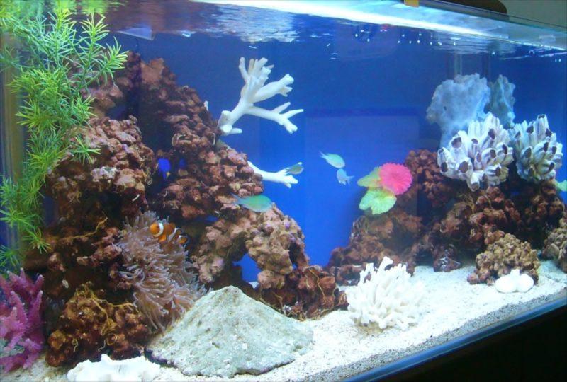 新生ファクター様に120cmサンゴ水槽を設置しました 水槽画像2