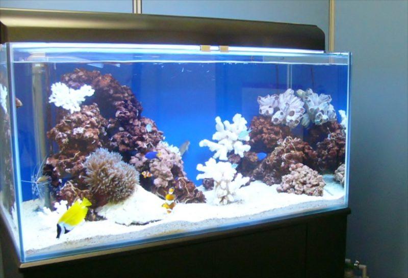 新生ファクター様に120cmサンゴ水槽を設置しました 水槽画像1
