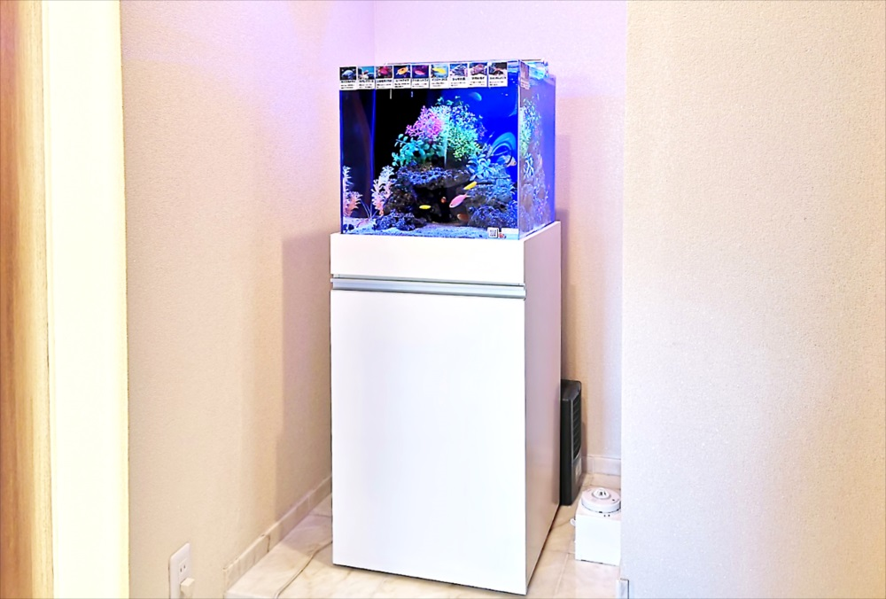 法務事務所 45cm海水魚水槽 設置事例 その後  メイン画像