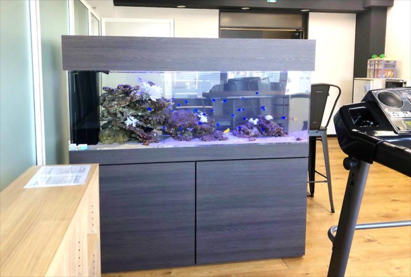 オフィス事務所 大型150cm海水魚水槽 設置事例 水槽画像1