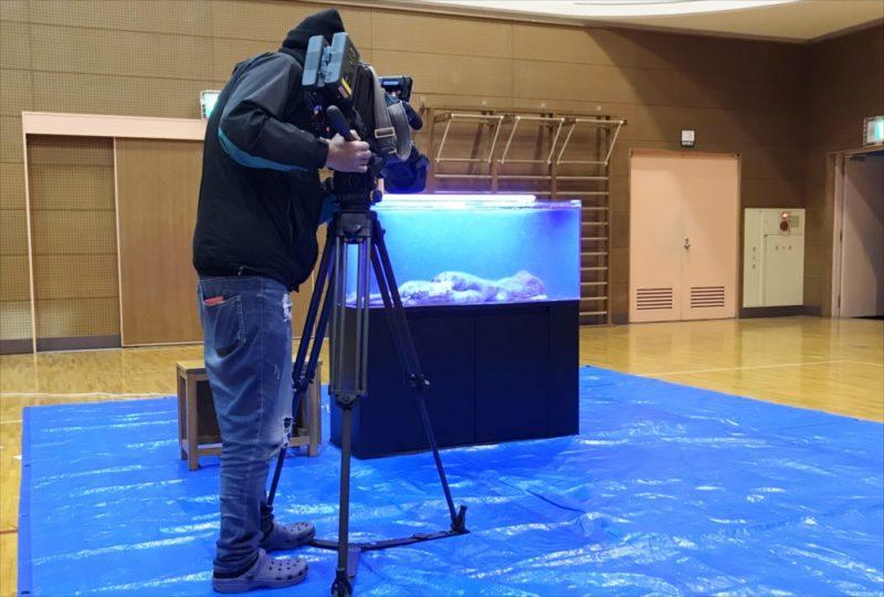朝日放送テレビ『探偵ナイトスクープ』 タコ水槽を設置 水槽画像1