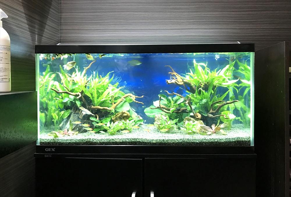 オフィス 90cm淡水魚水槽 リニューアル・メンテンナス事例