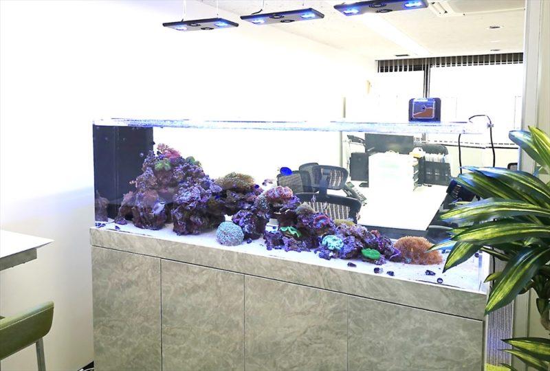 オフィス 大型サンゴ水槽 設置事例 その後 水槽画像1