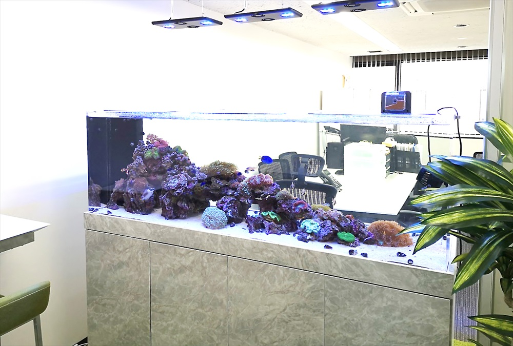 オフィス 大型サンゴ水槽 設置事例 その後 メイン画像