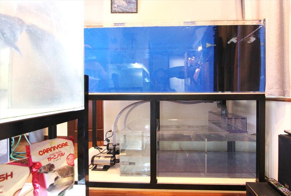 個人宅 アロワナ水槽 正面画像
