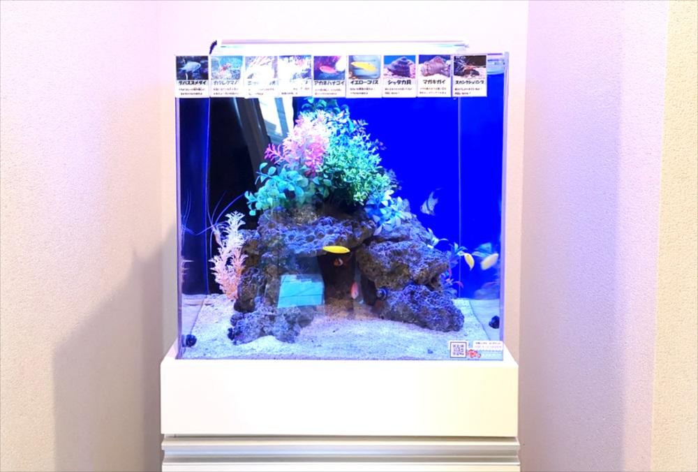 オフィス 受付 45cm海水魚水槽 正面画像